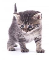 kitten-300x200